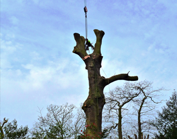Plymouth Tree Surgery