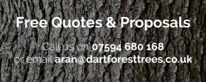 Quote Banner 300x120 - Tree Surgeon Plymouth & South Hams