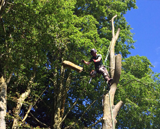 tree consultancy Plymouth
