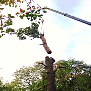 Tree Cutting - Devon Stump Grinding