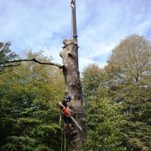Cutting - Tree Surgeons in Devon & Plymouth