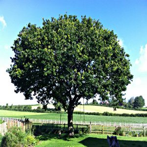 Plymouth Tree Surgeons- Devon Tree Surgery