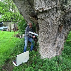 Tree Decay analysis by Tree Surgeons Dart Forest Tree Works