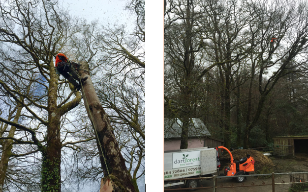 ashburton - Tree Surgeon Plymouth & South Hams