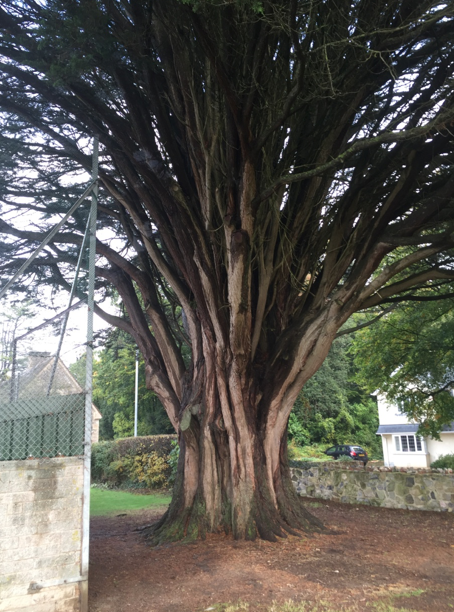 boveytracey - Tree Surgeon Plymouth & South Hams