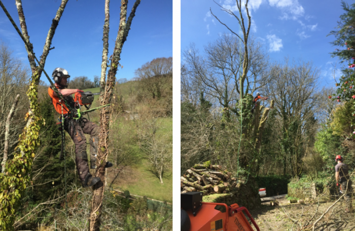 brixton - Tree Surgeon Plymouth & South Hams