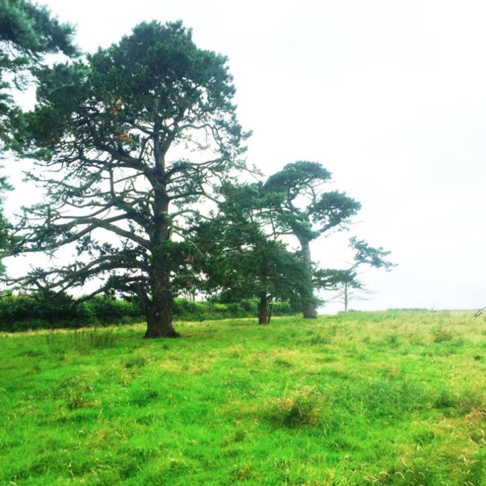 calstock - Tree Surgeon Plymouth & South Hams
