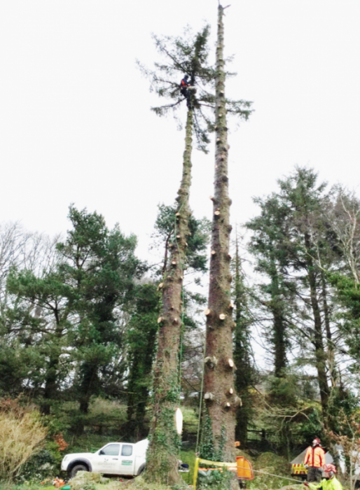 chagford - Tree Surgeon Plymouth & South Hams
