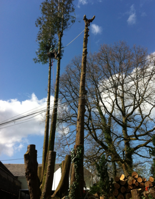 dartington - Tree Surgeon Plymouth & South Hams