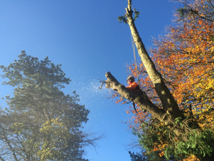 dartmoor - Tree Surgeon Plymouth & South Hams