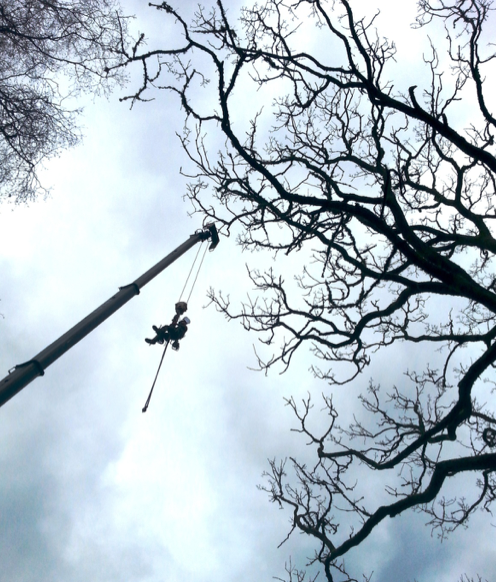 exeter - Tree Surgeon Plymouth & South Hams