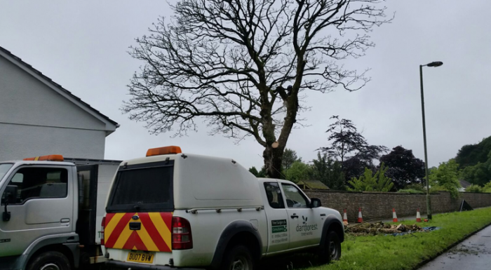 ivybridge - Tree Surgeon Plymouth & South Hams