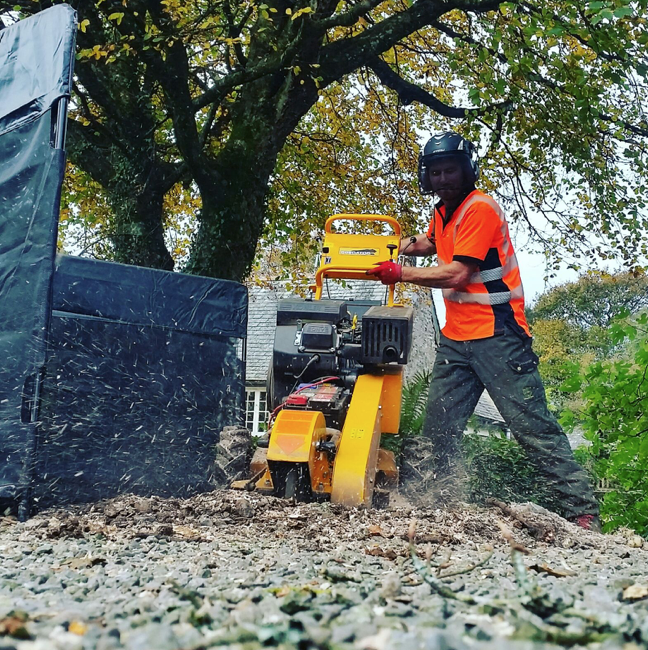 kingsbridge - Tree Surgeon Plymouth & South Hams