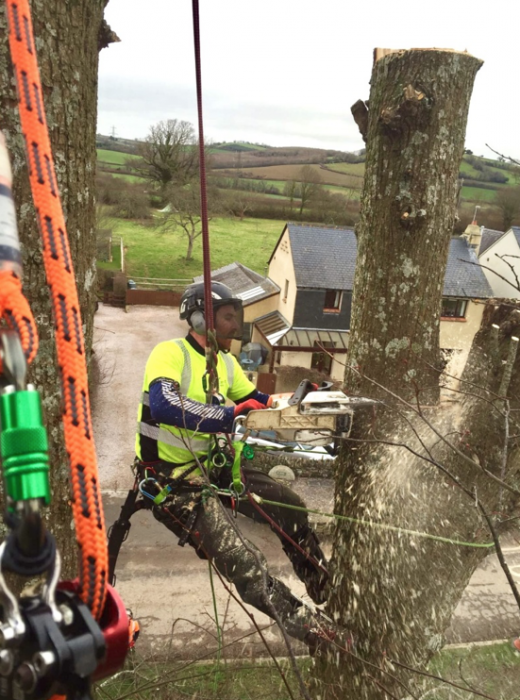 landscove - Tree Surgeon Plymouth & South Hams