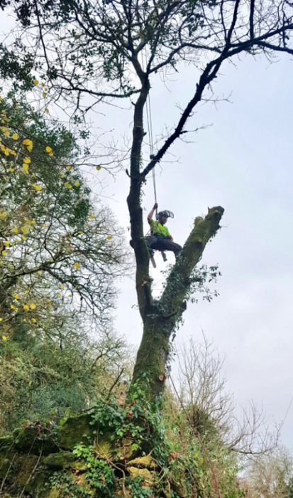mortenhampstead - Tree Surgeon Plymouth & South Hams