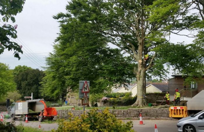 noss mayo - Tree Surgeon Plymouth & South Hams
