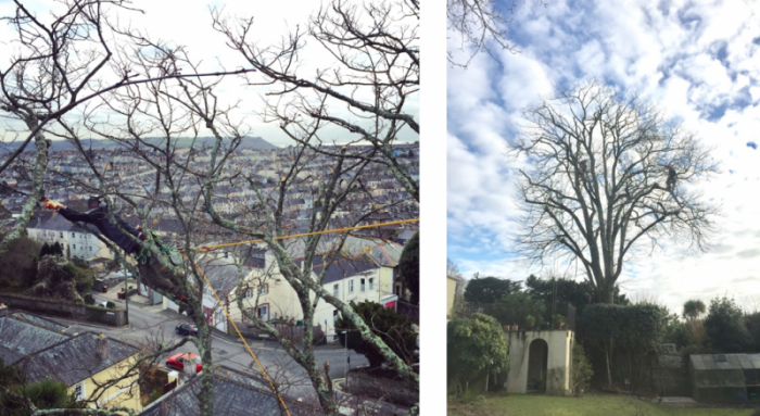 plymouth - Tree Surgeon Plymouth & South Hams