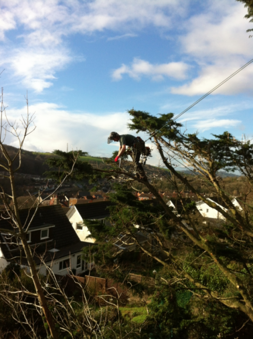 plympton - Tree Surgeon Plymouth & South Hams