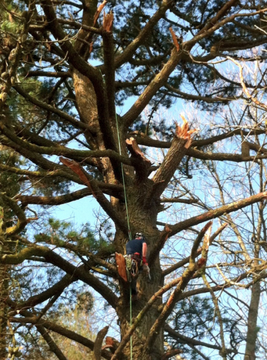 salcombe - Tree Surgeon Plymouth & South Hams