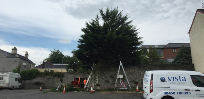 saltash - Tree Surgeon Plymouth & South Hams