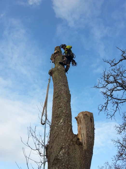 tedburn st mary - Tree Surgeon Plymouth & South Hams