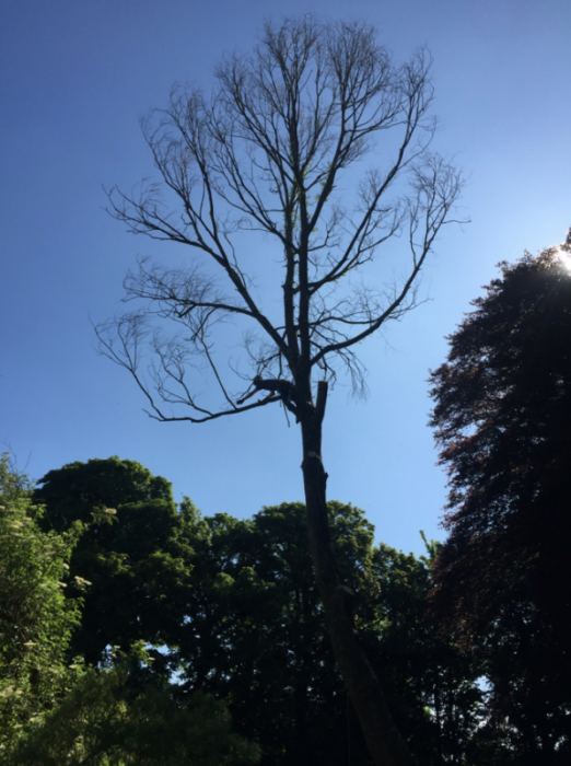 teignmouth - Tree Surgeon Plymouth & South Hams
