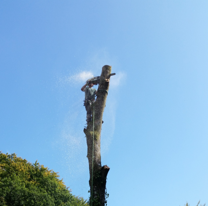 torquay - Tree Surgeon Plymouth & South Hams