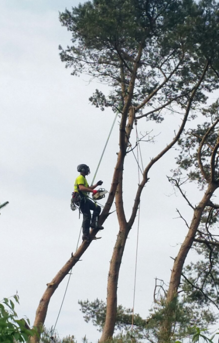 yelverton - Tree Surgeon Plymouth & South Hams