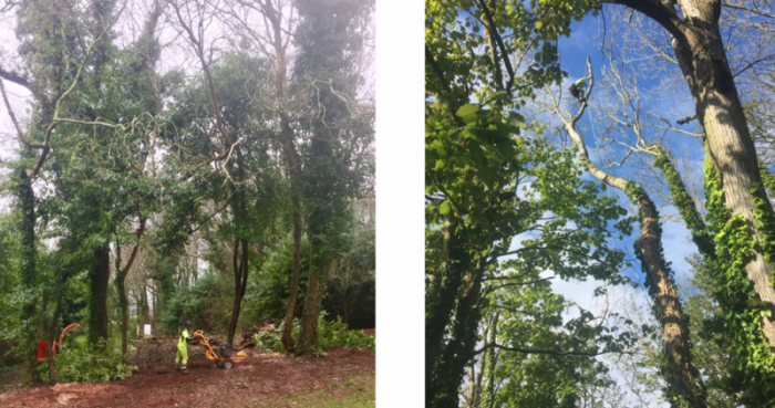 kingsbridge tree surgeon - Tree Surgeon Plymouth & South Hams