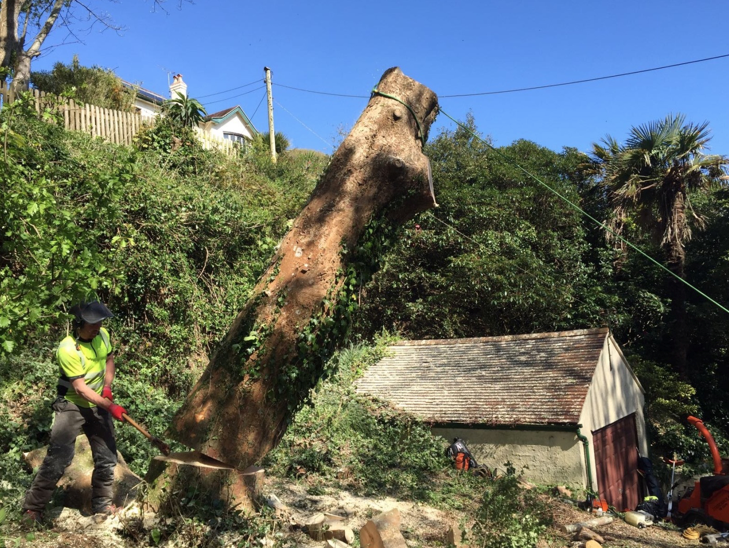 salcombe tree surgeon - Tree Surgeon Plymouth & South Hams