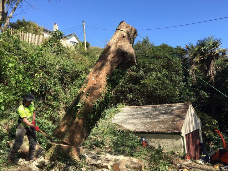 salcombe tree surgeon - Tree Surgeon Plymouth & South Hams