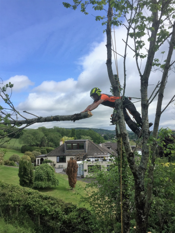 ashburton tree surgeon - Tree Surgeon Plymouth & South Hams